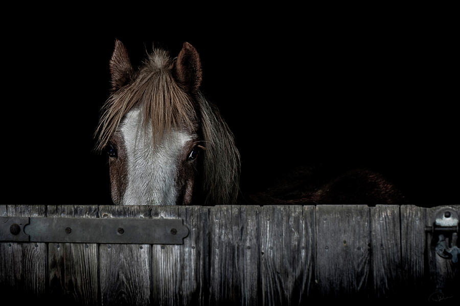 Pony Photograph - Peek a Boo by Paul Neville