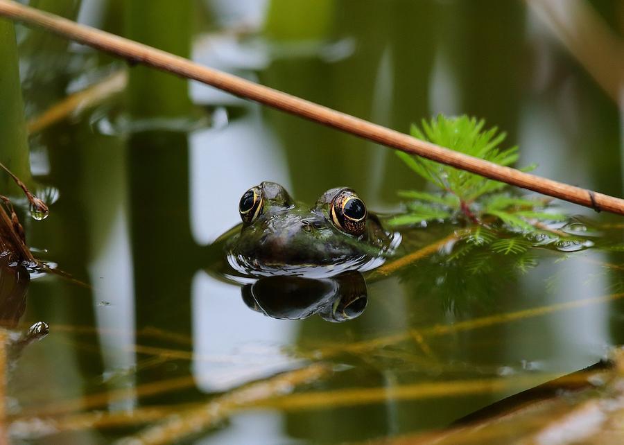 Frog Photograph - Peek-a-boo by Scott Fracasso