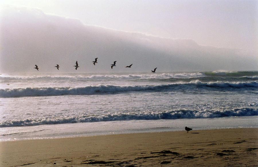 Seascape Photograph - Pelican Brief by Brande Barrett