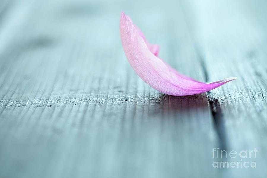 Peony Photograph - Peony Petals by Kati Finell