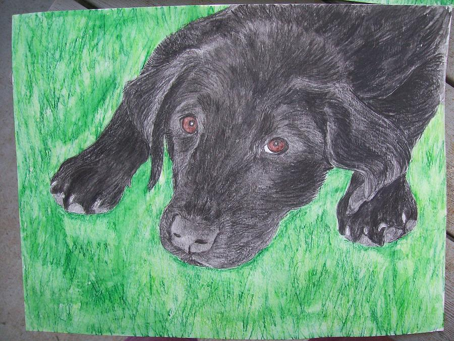 Lab Painting - Pet Portrait Dog Watercolor U Provide Picture By Pigatopia by Shannon Ivins