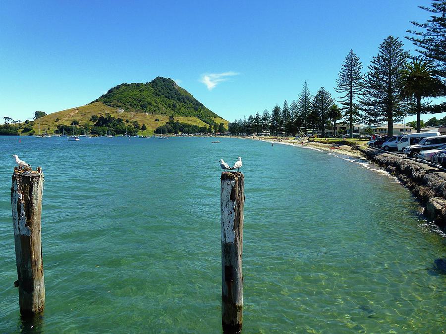 Pilot Bay Beach 1 - Mt Maunganui Tauranga New Zealand by Selena Boron