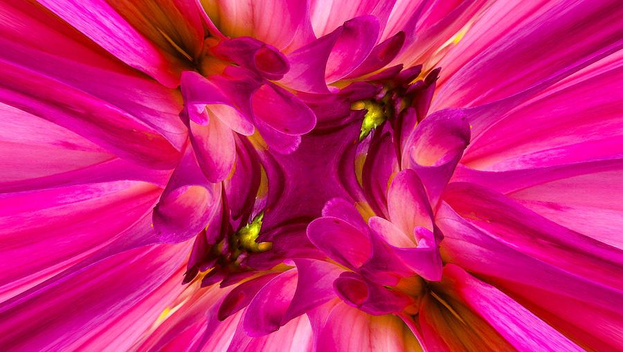 Austria Photograph - Pink Dahlia by Christine Czernin Morzin