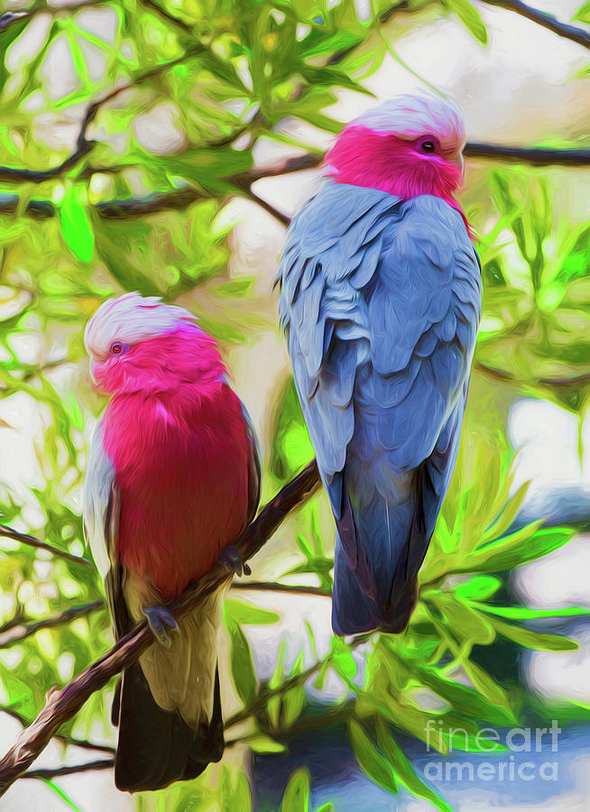 Pink Photograph - Pink Galahs by Sheila Smart Fine Art Photography