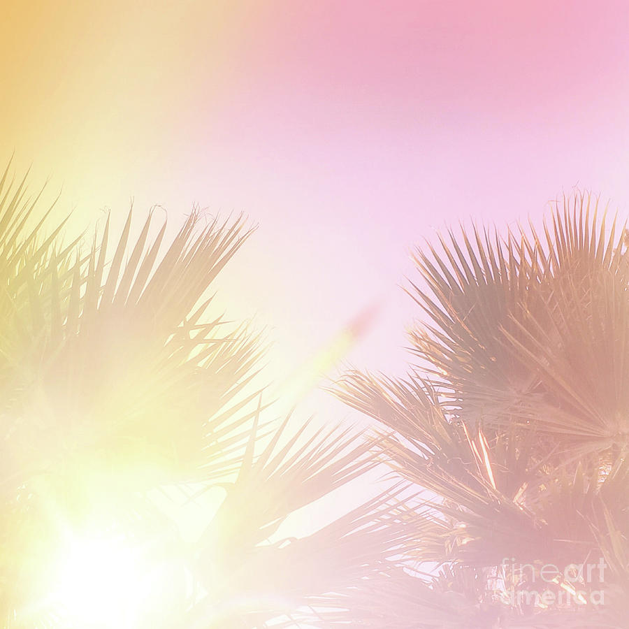 Pink Palms 2 by Cindy Garber Iverson