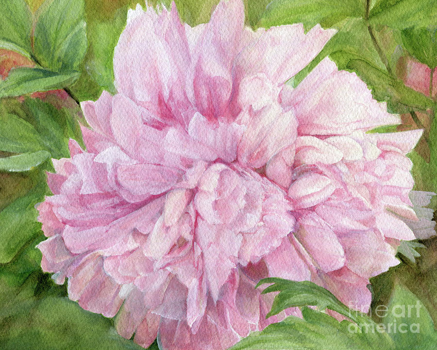 Pink Peony by Laurie Rohner