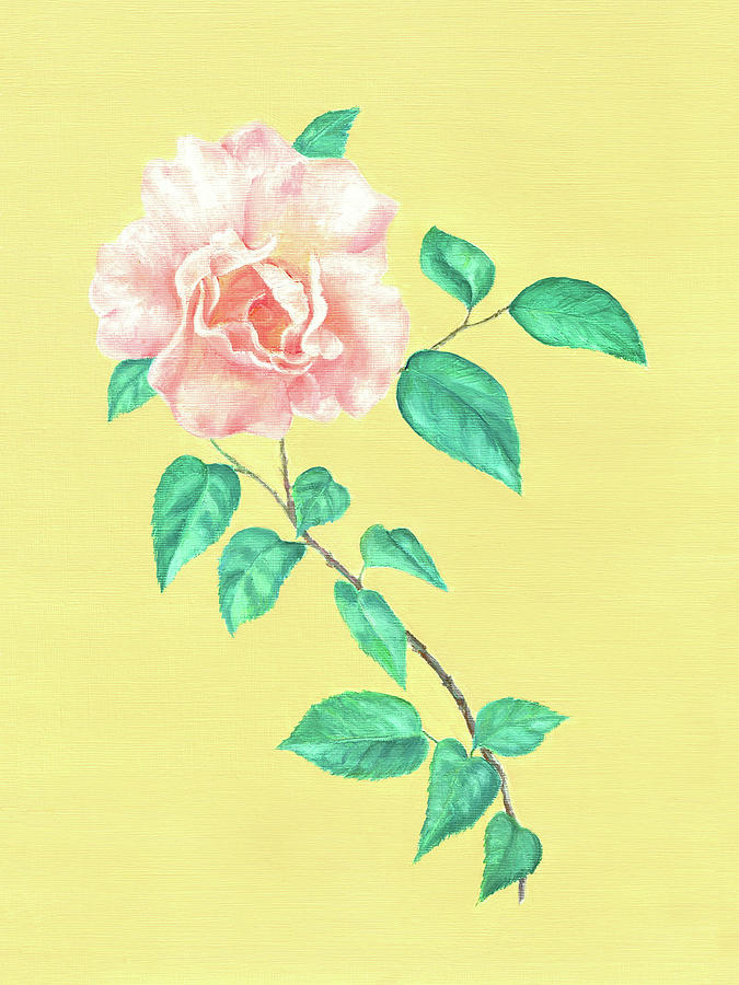Pink Rose by Elizabeth Lock
