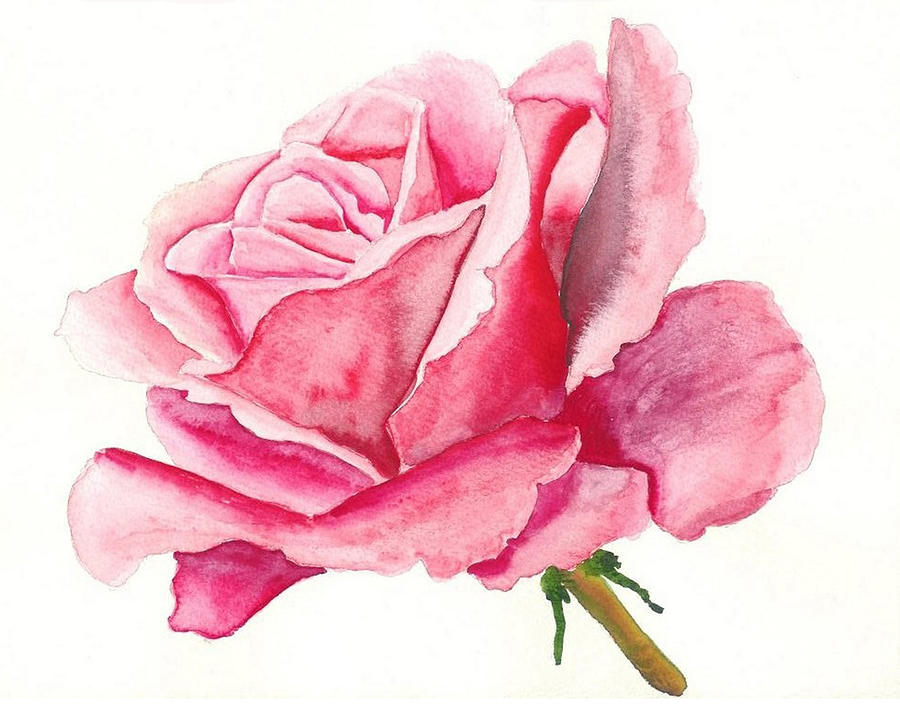 Pink Rose Painting - Pink Rose by Robert Thomaston