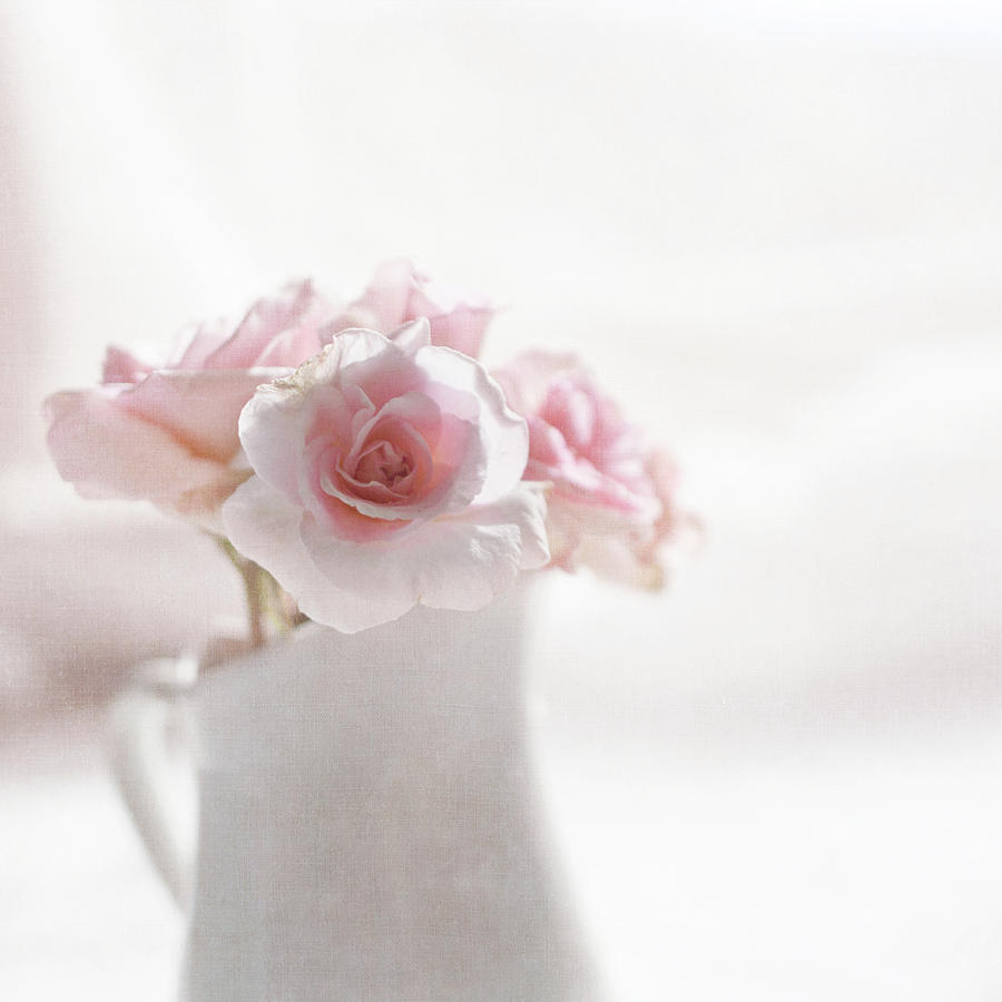 Square Photograph - Pink Roses by Jill Ferry