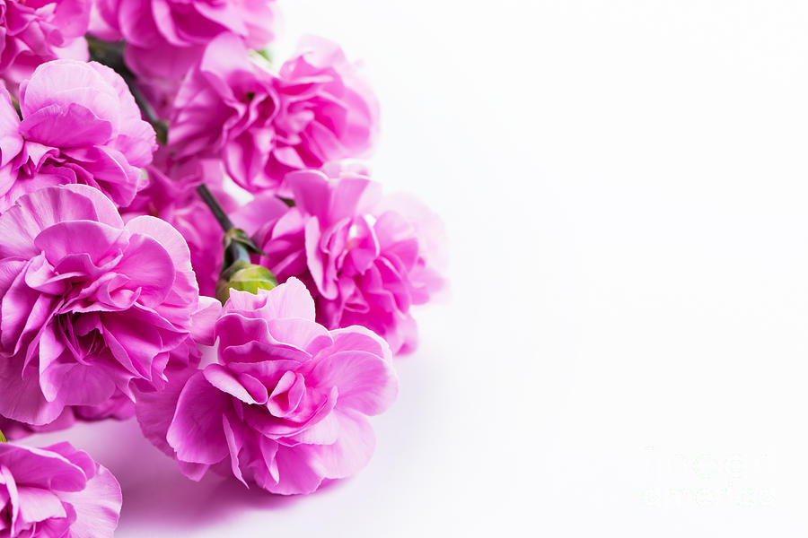 Pink Soft Spring Flowers Bouquet On White Background Photograph