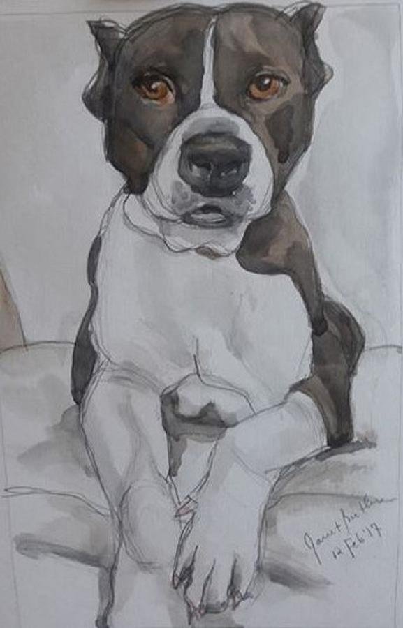 Animal Portraits Painting - Pit Bull by Janet Butler