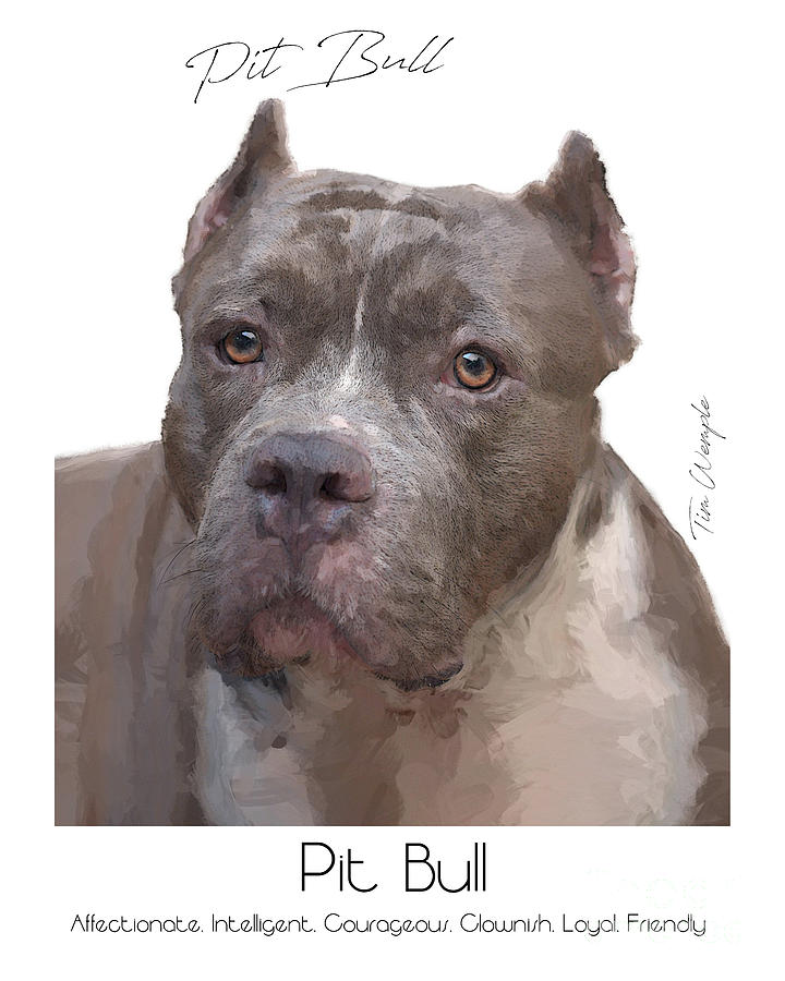Pit Bull Digital Art - Pit Bull Poster by Tim Wemple