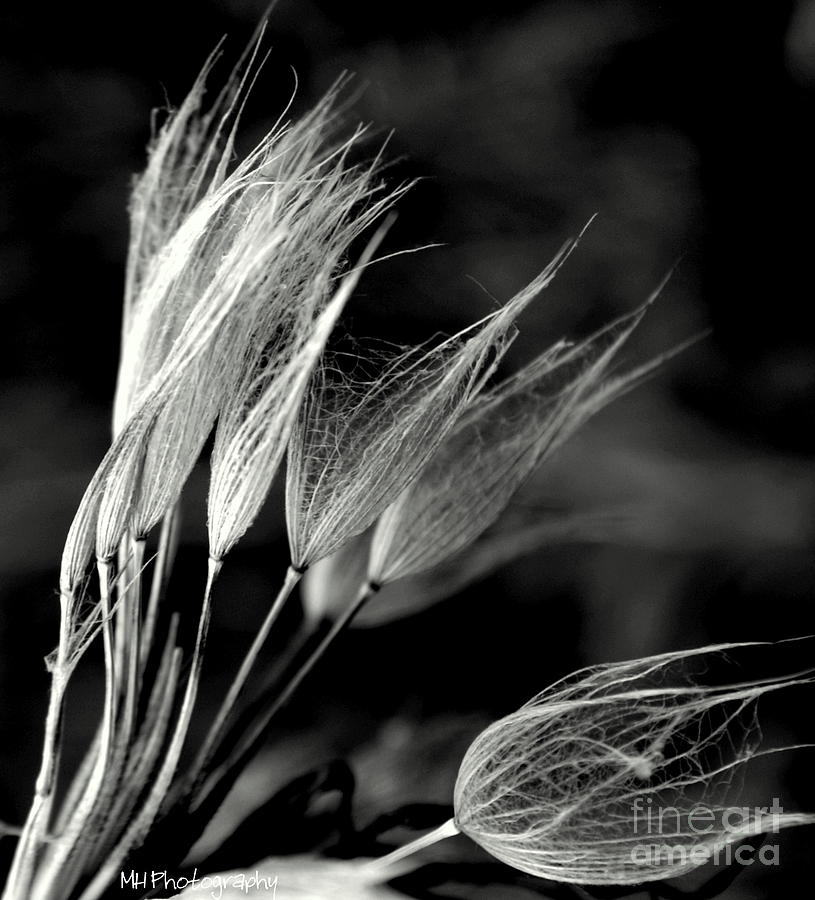 Seed Photograph - Pods by Phyllis Keller