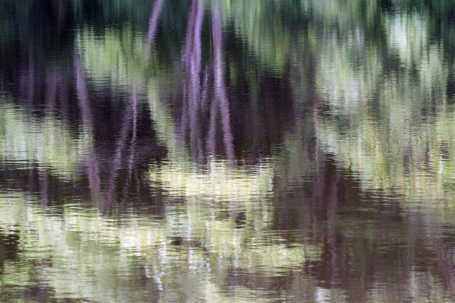 Reflection Photograph - Pond Reflect by Karol Livote