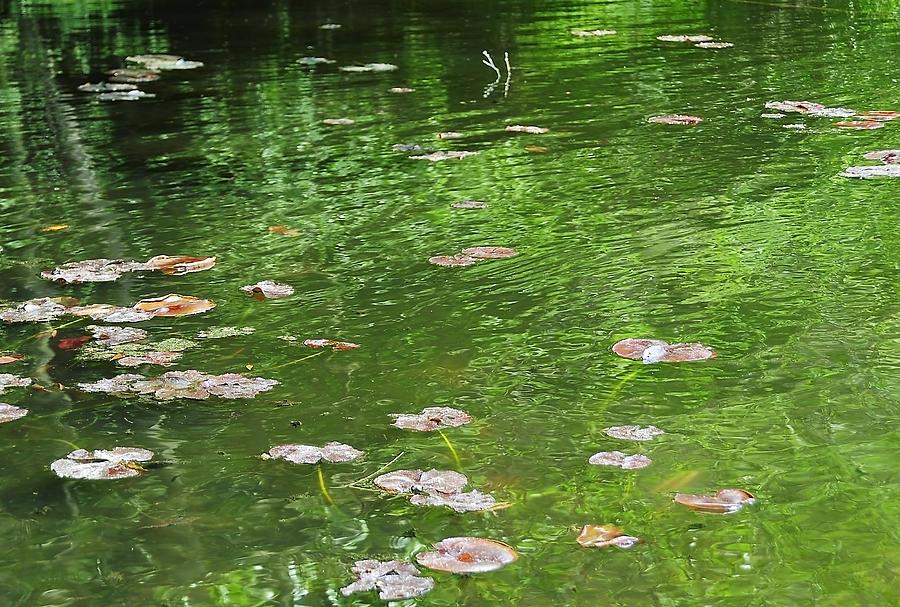 Water Photograph - Pond by Svetlana Sewell