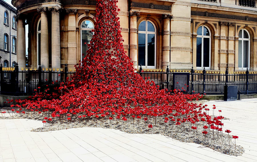Poppies - City of Culture 2017, Hull by Sarah Couzens