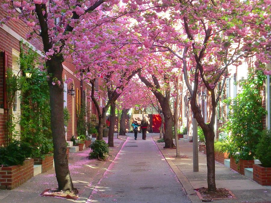 Cherry Blossom Photograph - Prettiest Street In Philadelphia by Andrew Dinh