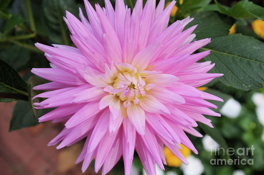 Pretty In Pink Photograph