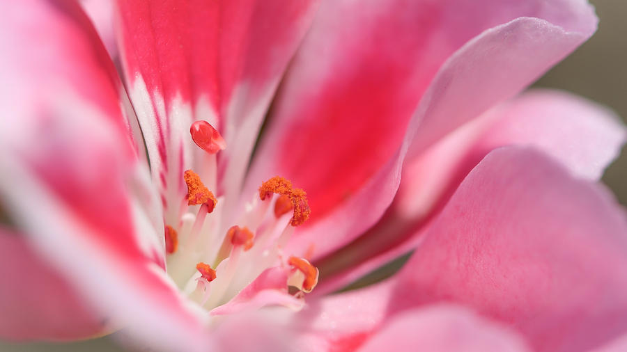 Pink Photograph - Small Details Matter by Louis Rivera