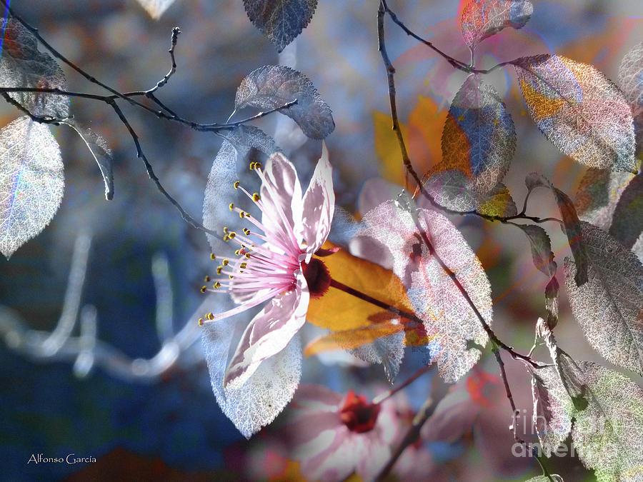 Decor Photograph - Primavera by Alfonso Garcia