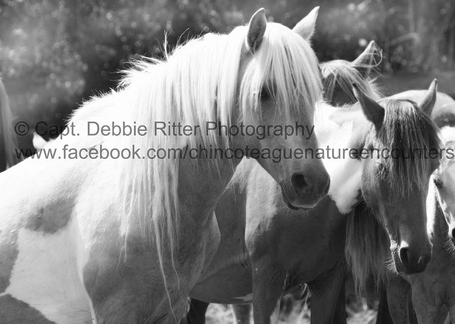 Wild Horse Photograph - Prince of Tides by Captain Debbie Ritter