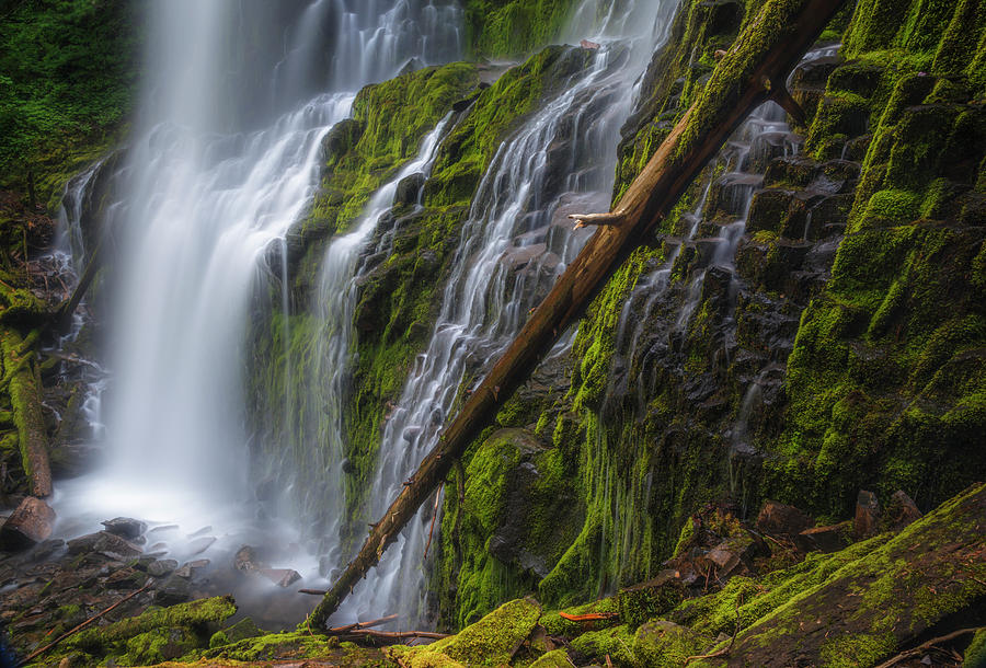 Water Photograph - Proxy Falls by Cat Connor