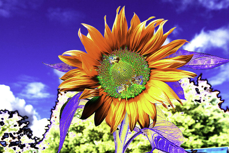 Psychedelic Sunflower Photograph by Peter Lloyd