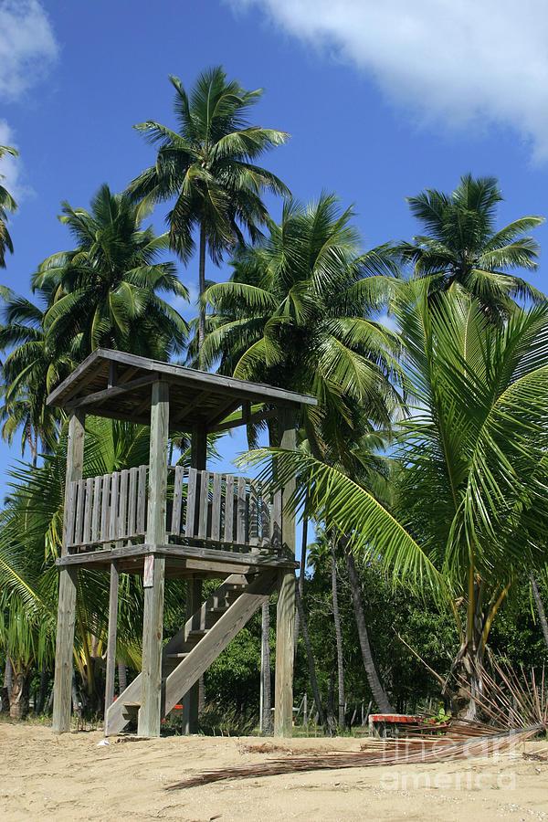 Palms Photograph - Puerto Rico Palms by Madeline Ellis