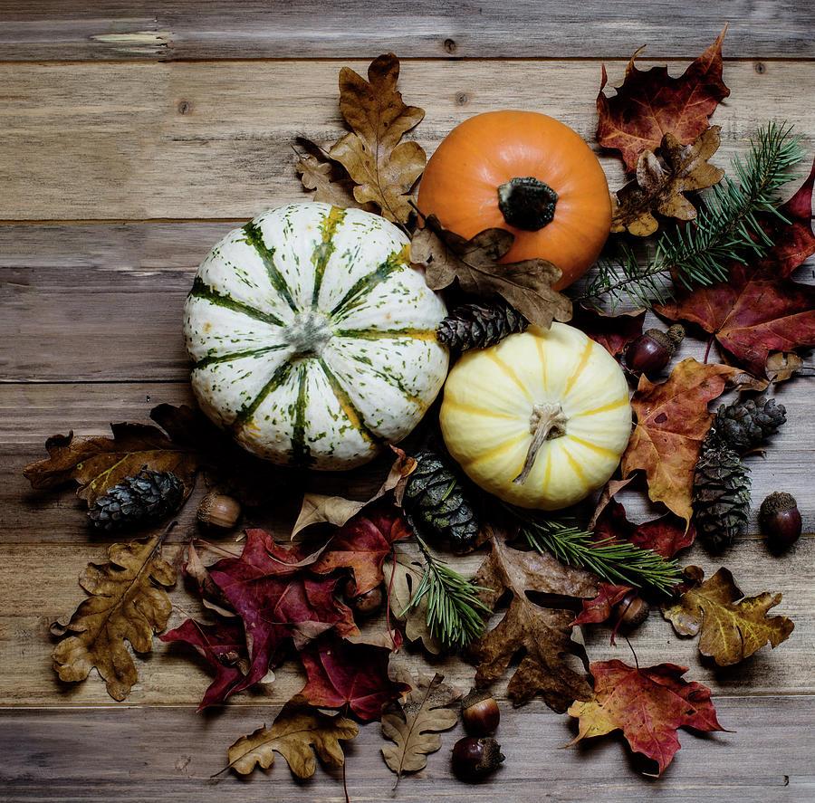 Thanksgiving Photograph - Pumpkins by Rebecca Cozart