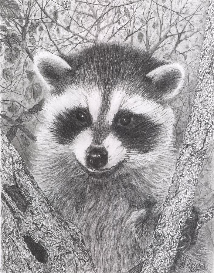 Raccoon Kit Drawing by Marlene Piccolin Raccoon Drawing