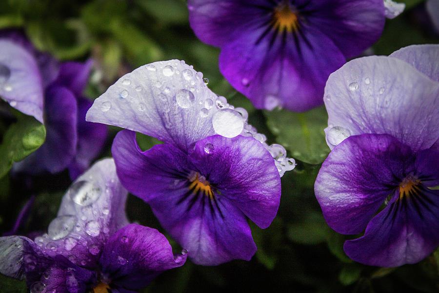 Rain Drops Photograph - Rain Drops In The Morning by Alex Rossi