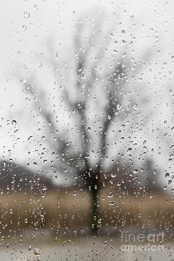 Tree Photograph - Rainy Day by Elena Elisseeva