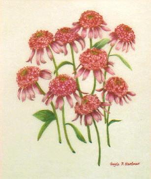 Wild Flowers Jewelry - Razzmatazz by  Gayle  Hartman