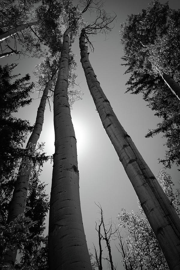 Reach For The Sky by Carl Simmerman