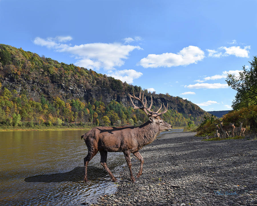 Red Deer By The River by Chris Busch