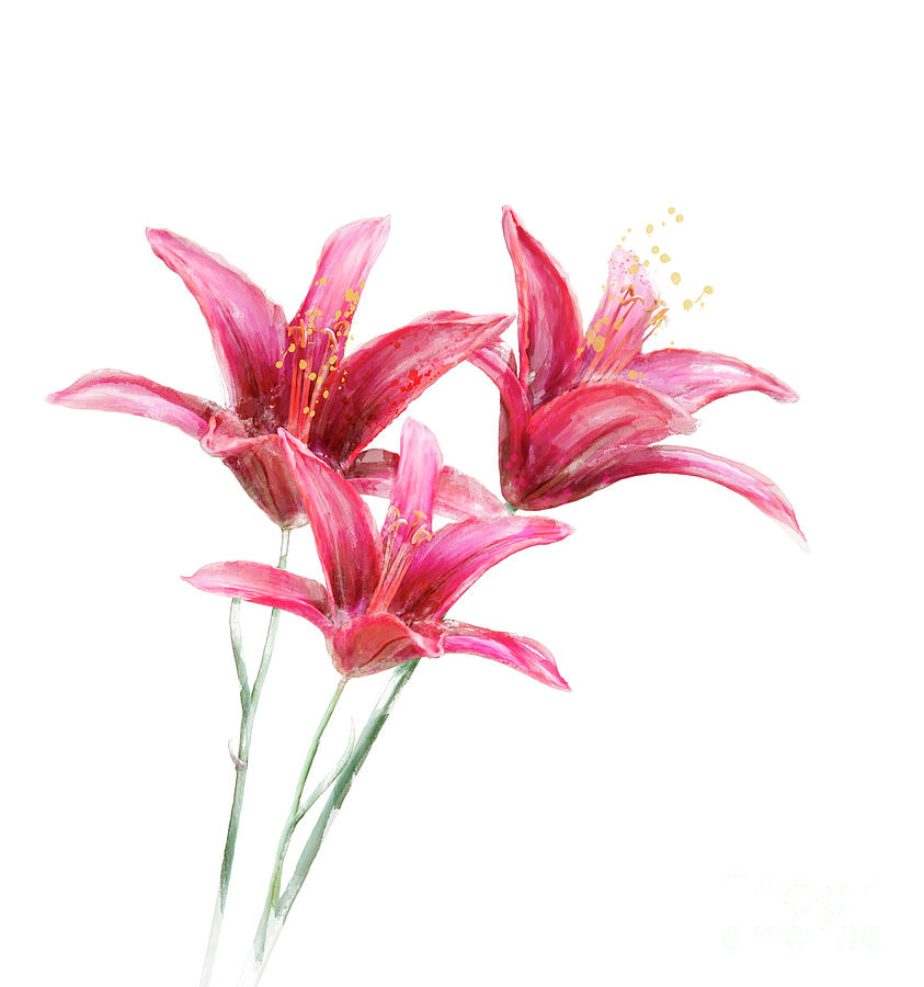 Red Lily Flowers Watercolor Digital Art By Svetlana Foote