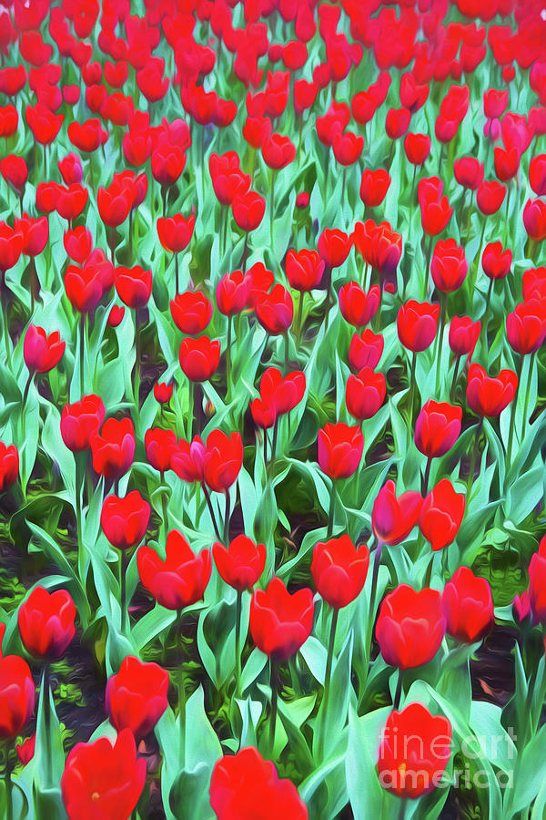 Red Tulips Photograph - Red Tulips by Sheila Smart Fine Art Photography