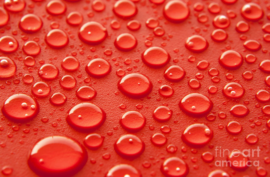 Water Photograph - Red water drops by Blink Images