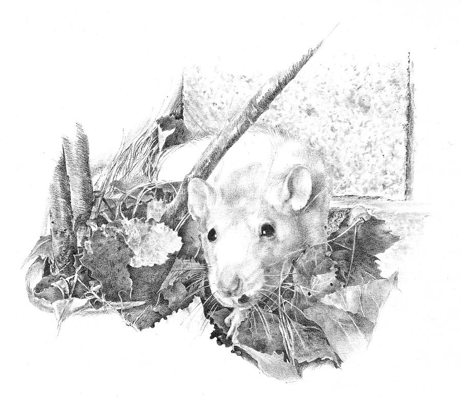 Rat Drawing - Reggie The Rat by Judith Angell Meyer