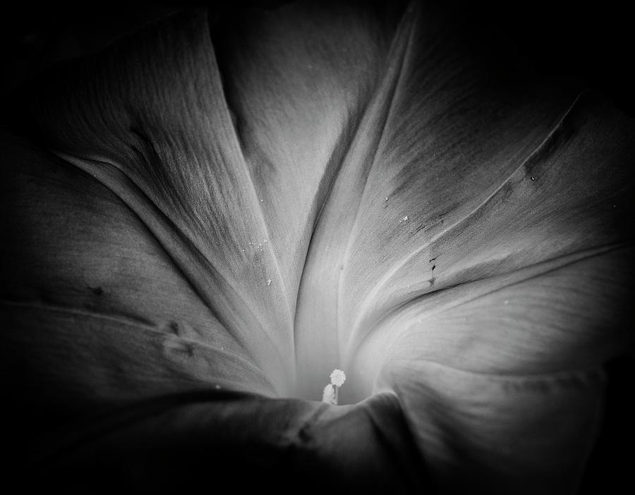 Matthew Blum Photograph - Rise And Shine  by Matthew Blum
