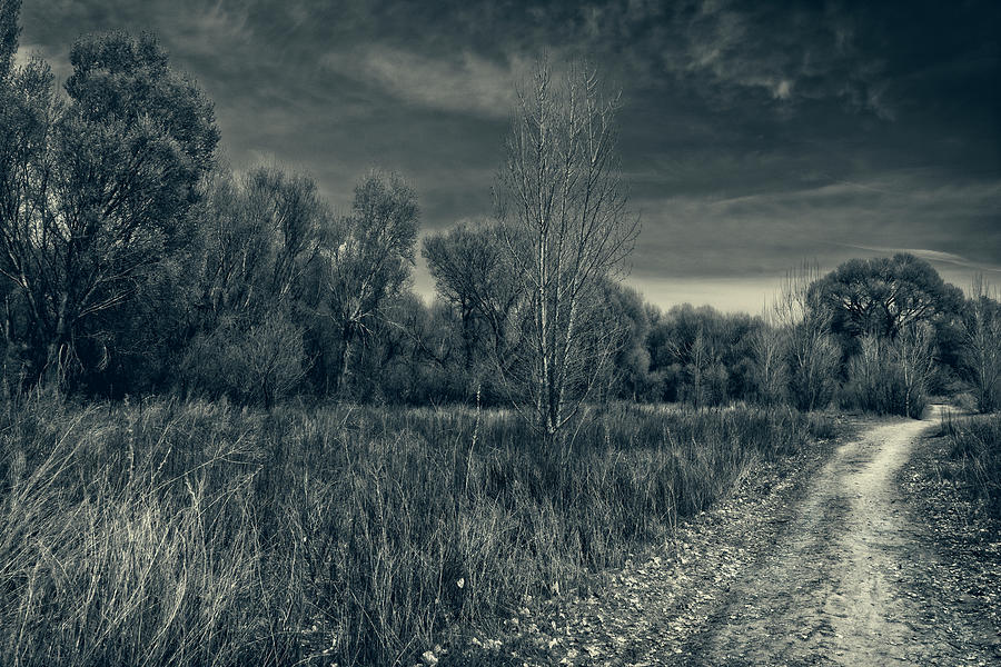 Road Through The Cottonwoods by Sandra Selle Rodriguez