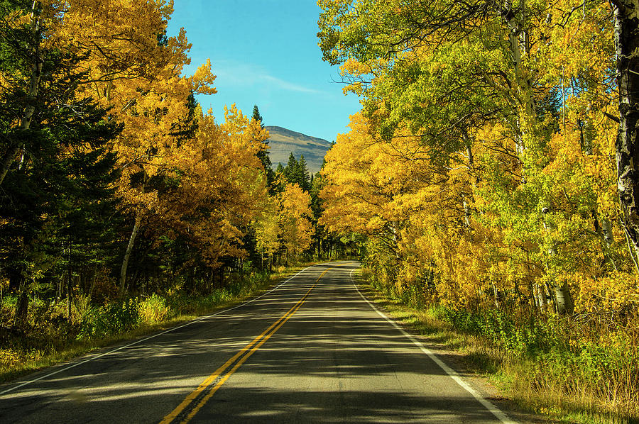Fall Photograph - Road to East Glacier by Roy Nierdieck