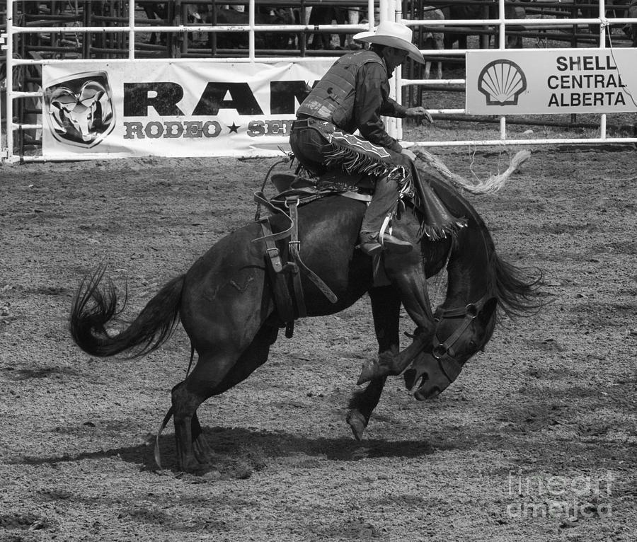 Cowboy Photograph - Rodeo Saddleback Riding 5 by Bob Christopher