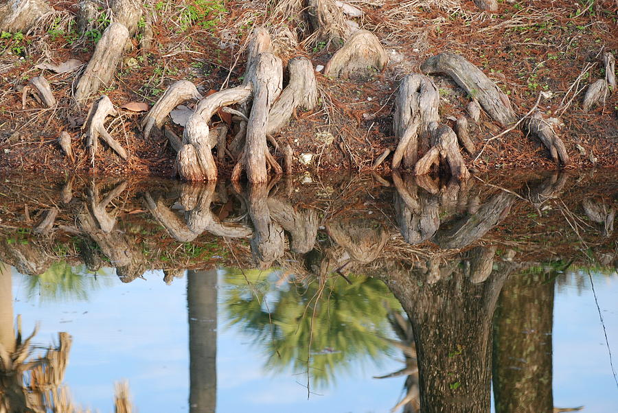 Roots Photograph - Rooted Reflections by Rob Hans