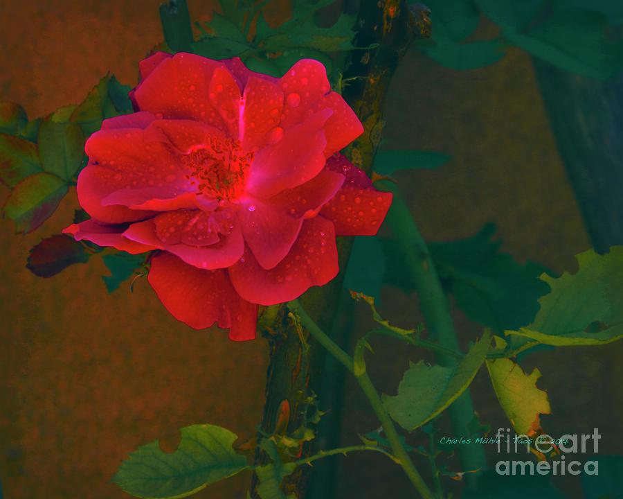 Rose Mixed Media