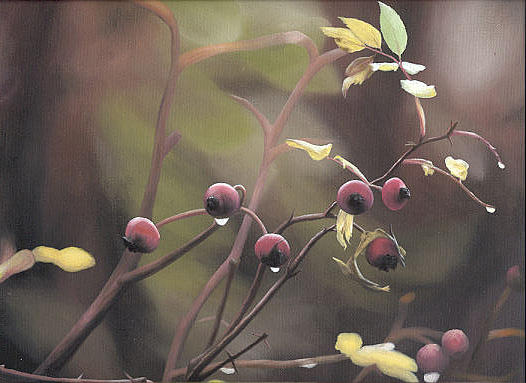 Close Up Painting - Rose Hips by Peter Winberg