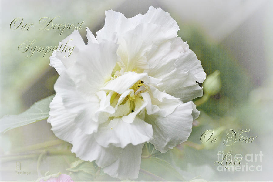 Rose of Sharon by Elaine Teague