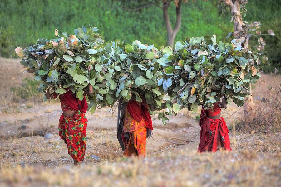 Women Photograph - rural Rajasthan by Joana Kruse
