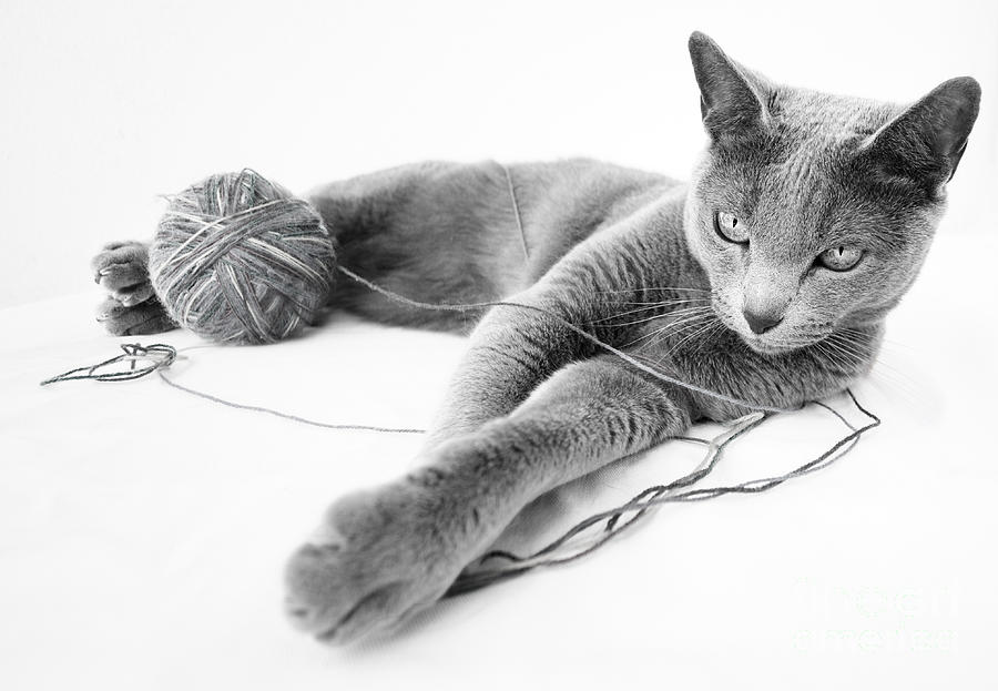 Russian Photograph - Russian Blue by Nailia Schwarz