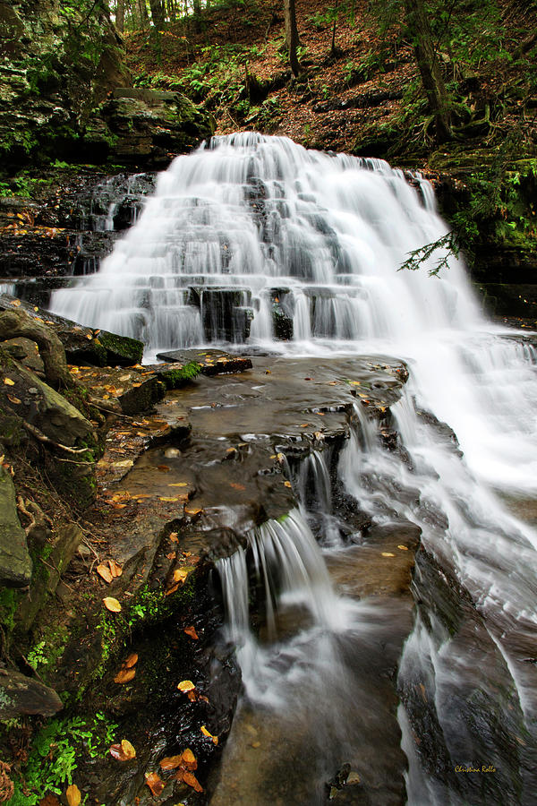 Salt Springs Waterfall by Christina Rollo